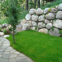 Lawn and Landscape Maintenance