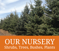 South Park Wholesale Nursery and Landscaping in Jackson Hole, Wyoming